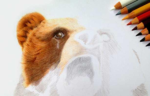 Foto 3: Workshop Fotorealistisch tekenen met kleurpotlood