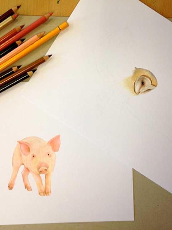 Foto 1: Workshop Fotorealistisch tekenen met kleurpotlood