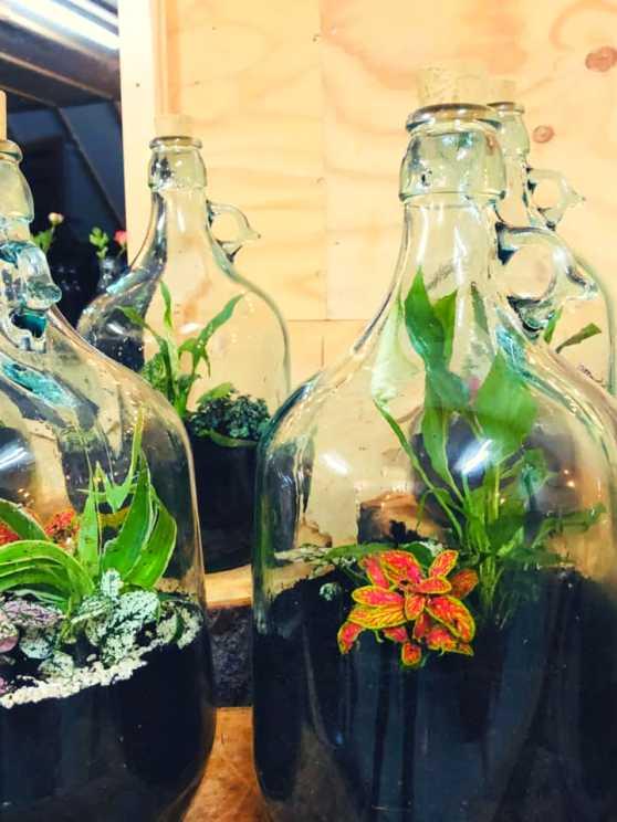 Foto 1: Maak je eigen plantenterrarium in een mooie glazen fles