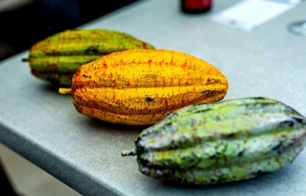 Foto 4: Chocolade workshop 'Van Cacaoboon tot heerlijke Belgische chocolade'